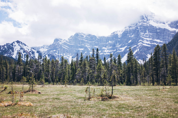 Banff National Park  Beauty In Nature Day Landscape Mountain Nature No People Outdoors Scenics Sky Tree