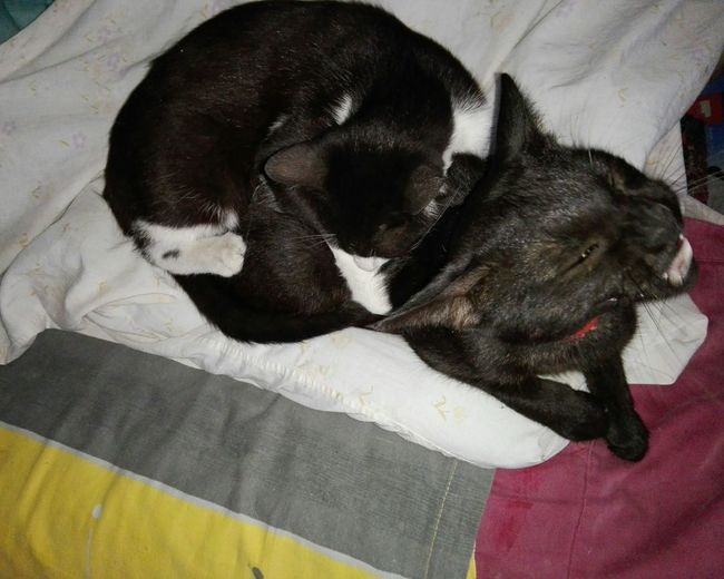 Two Cats Playing Pets Domestic Animals Animal Themes No People Black Color Cats Two Cats Close-up WOLFZUACHiV Photography Huawei Photography On Market WOLFZUACHiV Photos Wolfzuachiv Veronica Ionita Ionita Veronica Eyeem Market Huaweiphotography No Person Screaming Cat Screaming Ouch Kitten Bitting Cat Bitten Biting