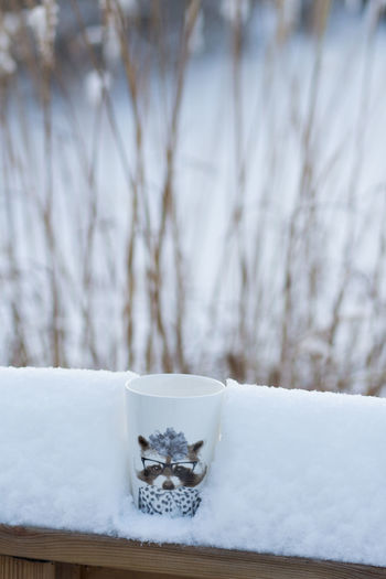 Snow Winter Cold Temperature White Color No People Focus On Foreground Plant Frozen Nature Day Extreme Weather Sweden Nature Coffee Cup Hennes And Mauritz In My Garden Winter Garden Coffee Outside Coffee In Snow