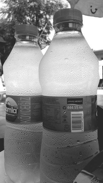 Black & White Enjoying Life Water Hot Weather