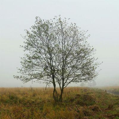 Tychy Kobiór Śląsk Igerssilesia Igerspoland Igerstychy Mobilephotography Tree Drzewo Jesień Lubiepolske