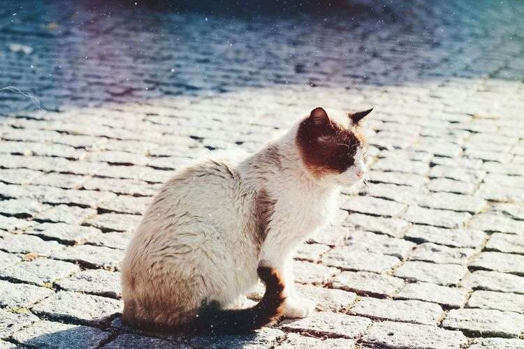 Close-up of cat on paving stone street