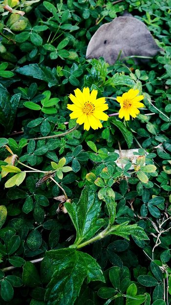 ' I see yellow flowers on the green grass ' 💓🌱 Hello World Simple Things Plants Flowers, Nature And Beauty Colorful Green Grass And Flowers