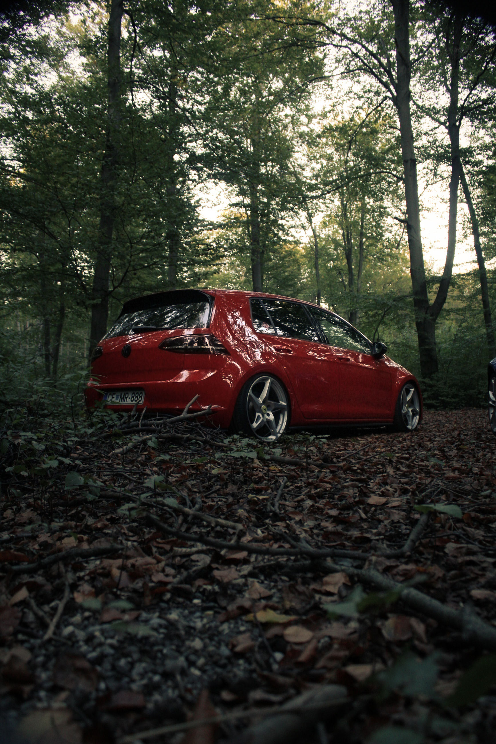 tree, red, mode of transportation, plant, transportation, land, car, land vehicle, motor vehicle, nature, forest, day, no people, plant part, leaf, selective focus, damaged, woodland, outdoors, field, ruined, demolished
