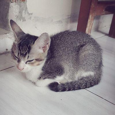 Pets Domestic Cat Animal Themes No People Cute Kitten Adorable Kitten Sleeping Cat Sleepy Kitty