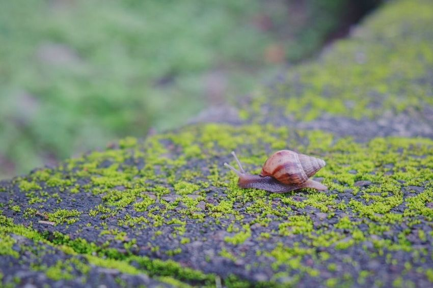 Snail One Animal Nature No People Selective Focus Day Outdoors Gastropod Animal Themes Animals In The Wild Fragility Close-up Beauty In Nature