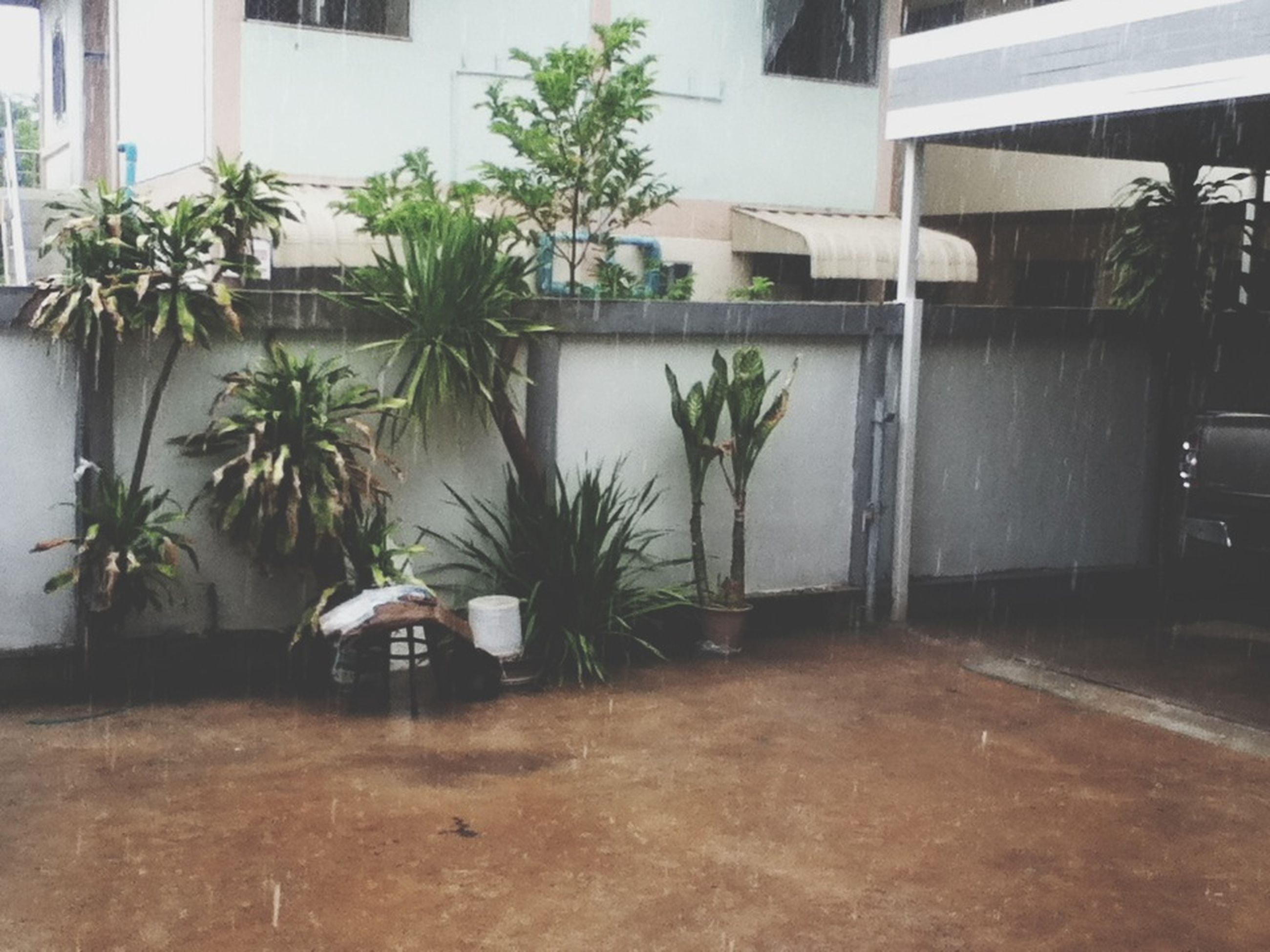 architecture, built structure, building exterior, potted plant, house, plant, palm tree, growth, tree, residential building, residential structure, window, building, day, no people, outdoors, sunlight, chair, street, empty
