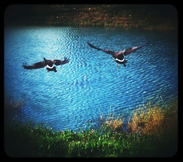 ...and Together We Fly...Into the Blue. For My Love Together We Fly With You
