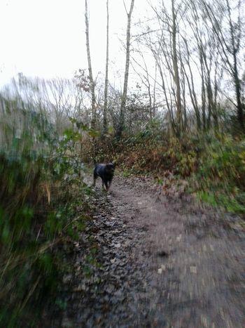 Runrunrun! My Dog Is Cooler Than Your Kid. Rottweiler Mein Hund Unterwegsunddraußen Hunderunde NRW In Germany