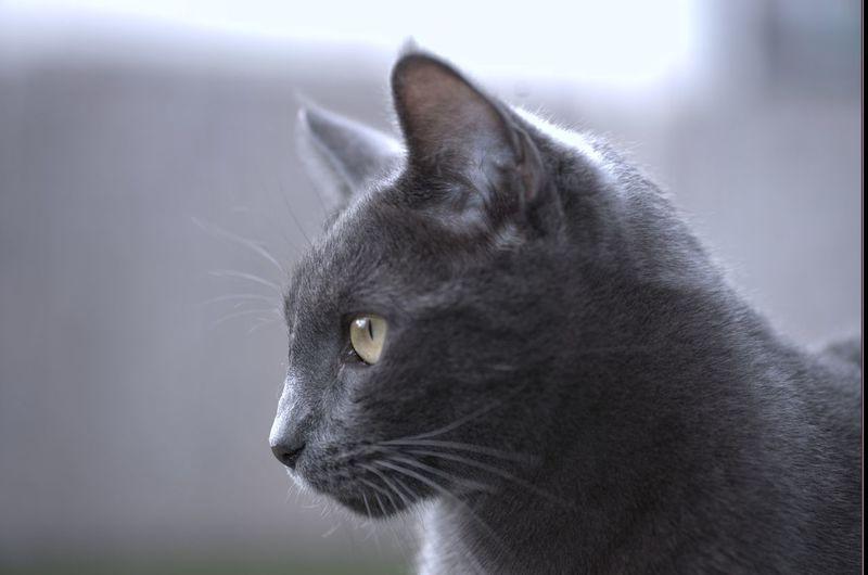 My cat.. Cat