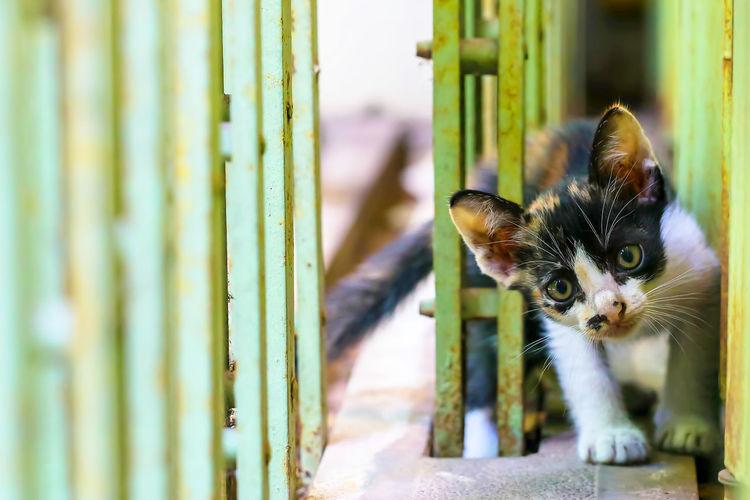 Portrait of cat by kitten outdoors