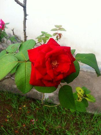 Flowers !!! Beautiful ♥ Creation Of God !