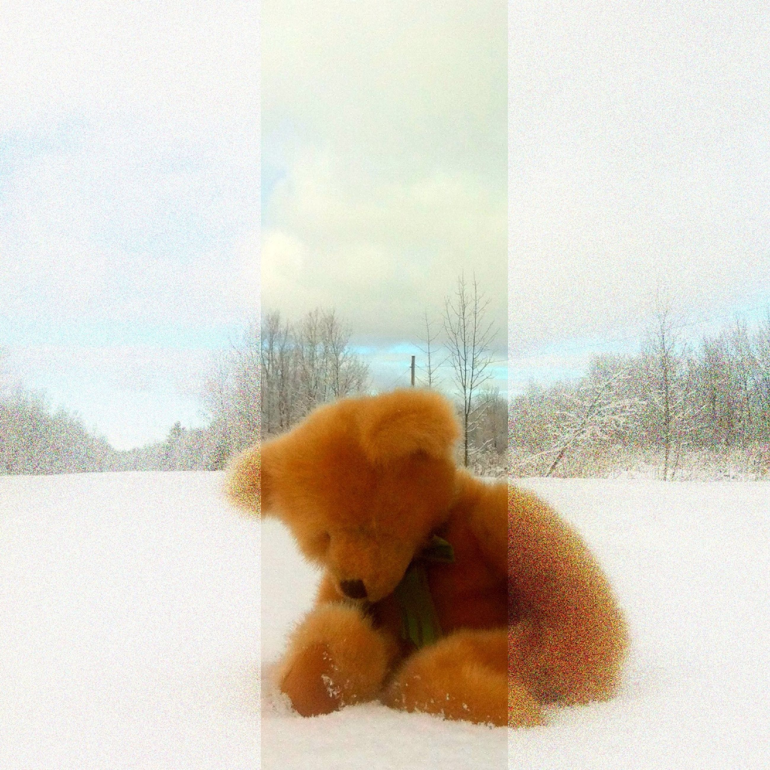 domestic animals, pets, cold temperature, window, winter, dog, season, weather, glass - material, one animal, sky, snow, mammal, animal themes, transparent, reflection, nature, tree, day, indoors