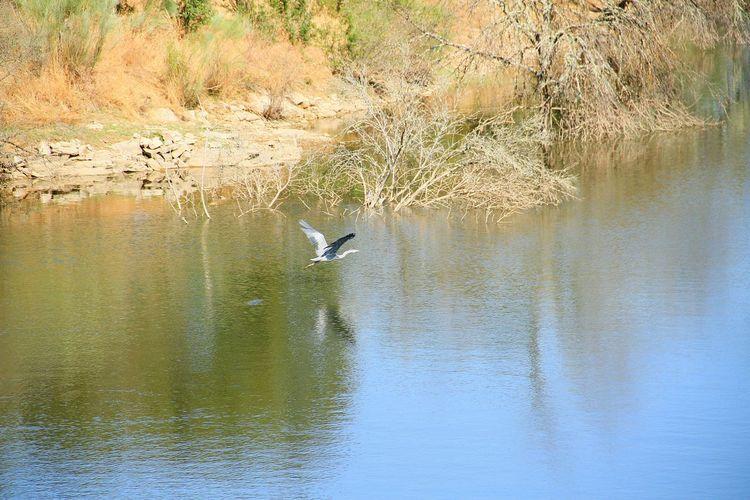 High angle view of gray heron flying over lake