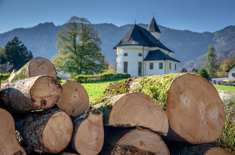 Stack of logs against trees and buildings