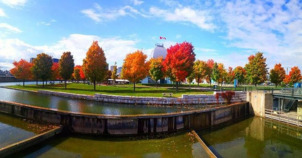 "The color pallet: ""changing of the leaves"" Montrealfun Funwithkatie Gorgeousoldport Gorgeoustrees Loveit Rainbowcolors Autumnisthebest Obsession Walkingwalkingandmorewalking Tourismquebec MTL Instahappiness Instalove Instamoments Colormeautumn"
