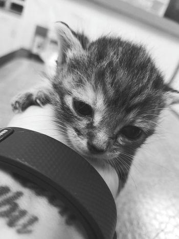 Pet Portraits EyeEm Selects