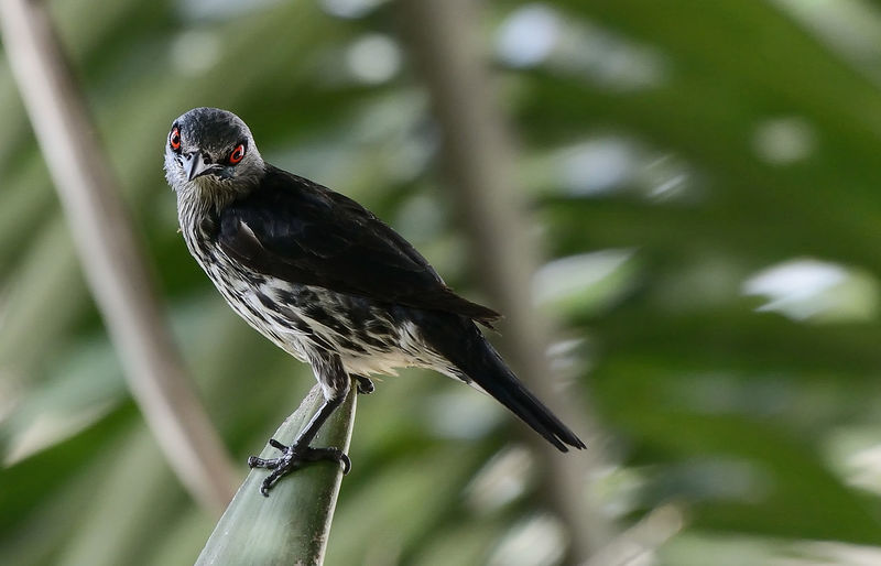 Close-up of starling bird perching on green plant