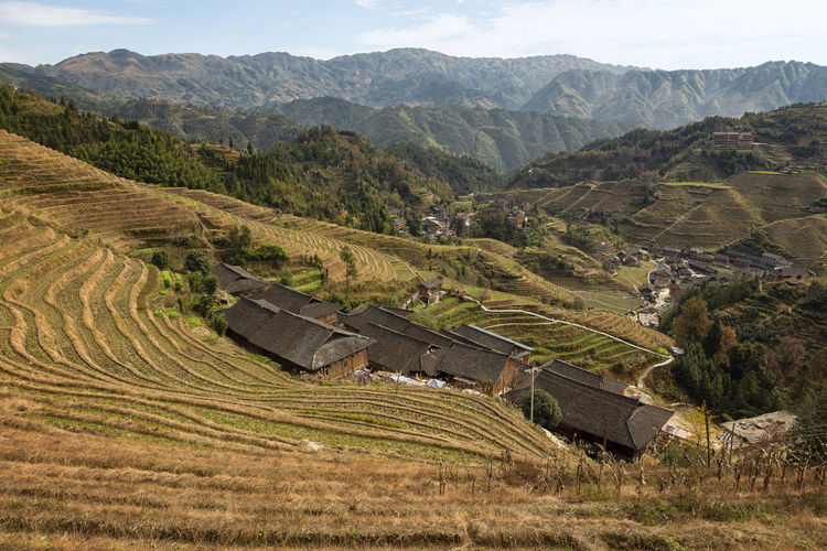 Plant Nature Land Outdoors Rice Terraces Rice Rice Paddy Longji Rice Terrace China TravelDestinations Travel Destinations Travel Photography Travelling