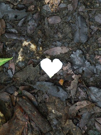 Bright Heart Dry Leaves Dry Leaves - Fresh Nature Dry Leaves On The Floor Elevated View Forest Ground Heart Shape Heart Shapes In Nature Heart ❤ Textured  Trash