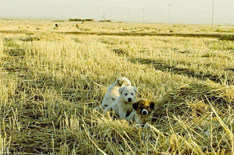 Wild Dogs dogs Animals Summer