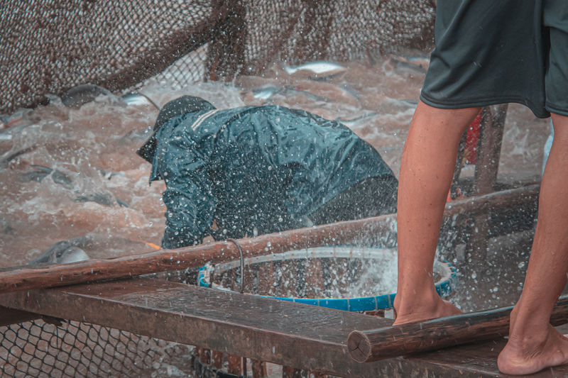 Locals harvesting the grown catfish on the mekong delta
