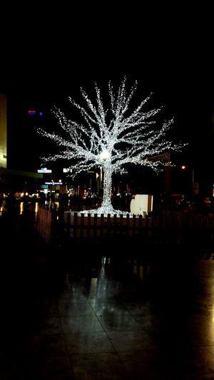 Tree Treelight Night Outdoors Beatiful City Antalya , Turkey Turkey PhonePhotography