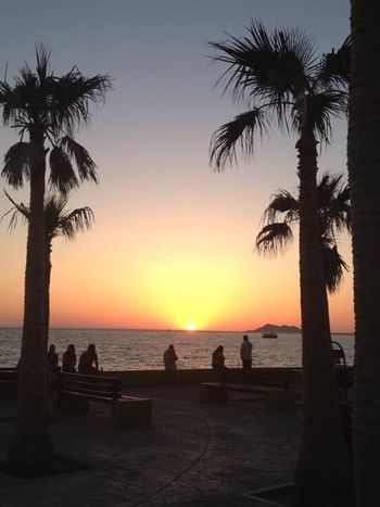 I miss the smell of the ocean. It's been way too long. Beach Sea Silhouette Palm Tree Water Horizon Over Water Beauty In Nature Scenics Nature Tranquility Tree Tranquil Scene Sand Tree Trunk Sky Outdoors Vacations No People Day