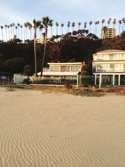 Palmtrees California Beach Urban Downtown Los Angeles Summer