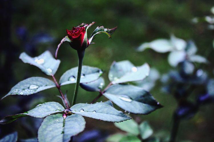 rose Bird Flower Leaf Close-up Springtime Decadence My Best Photo