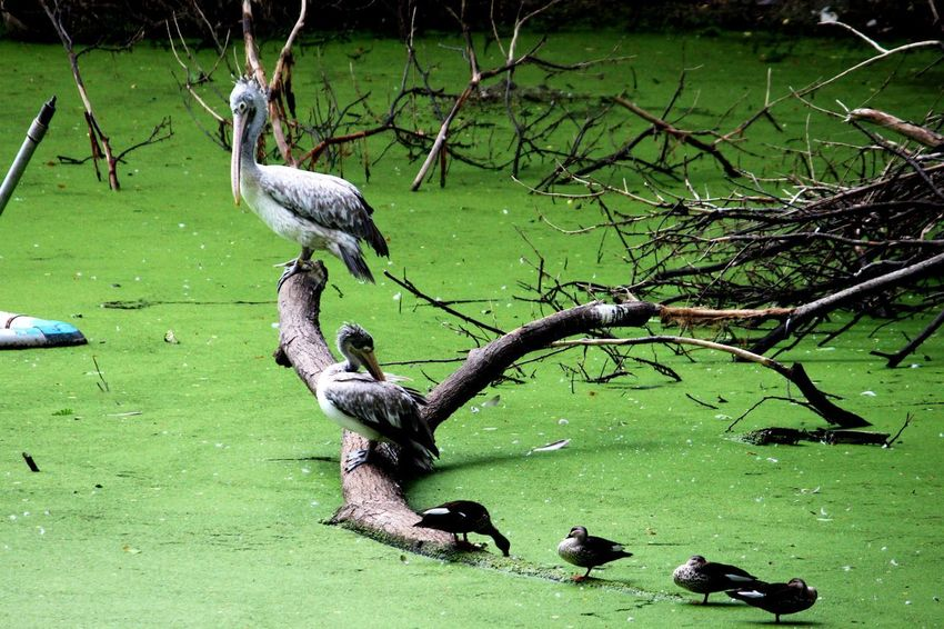family... EyeEmNewHere Animals In The Wild Bird Animal Themes Animal Wildlife Water Nature Outdoors Lake Beauty In Nature Day