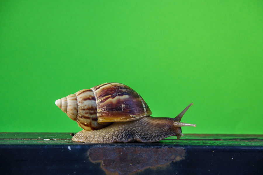Animal Themes Animal Wildlife Animals In The Wild Close-up Day Fragility Gastropod Nature No People One Animal Outdoors Snail Wildlife