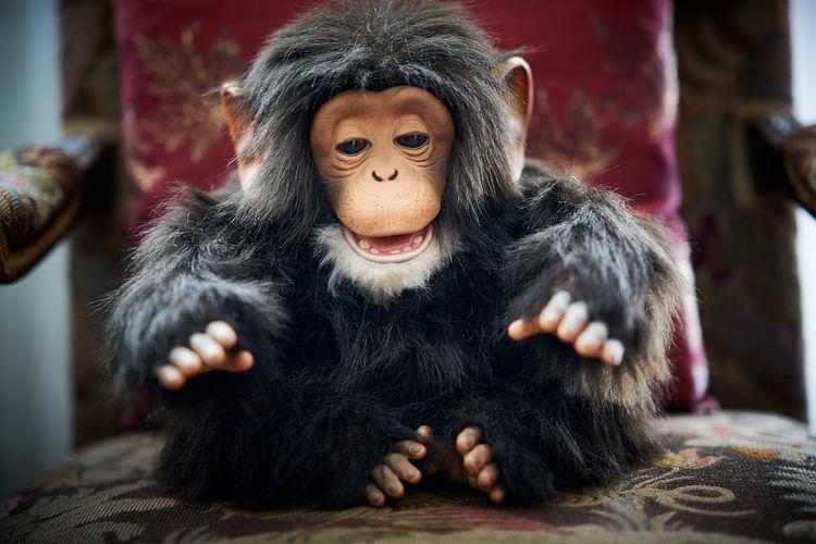 Close-up portrait of black primate doll