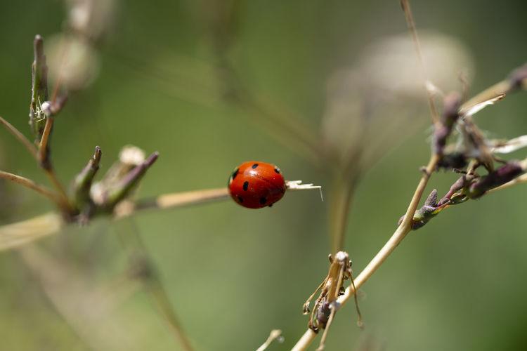 Ladybug Nature
