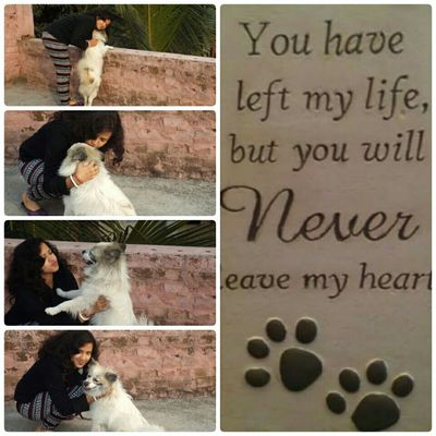I Love You Pogo Miss You Like Crazy R.I.P. My Friend Pogo My Pet Dog Love ♥ U Will Remain Forever In My Heart Baby