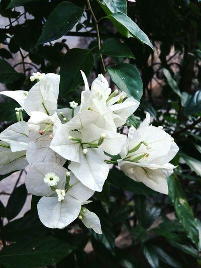 Photoshoot Photos Around You Flowers EyeEm Flower Eyeem Viet Nam Hà Giang Việt Nam!