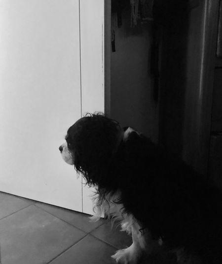 Waiting Pets