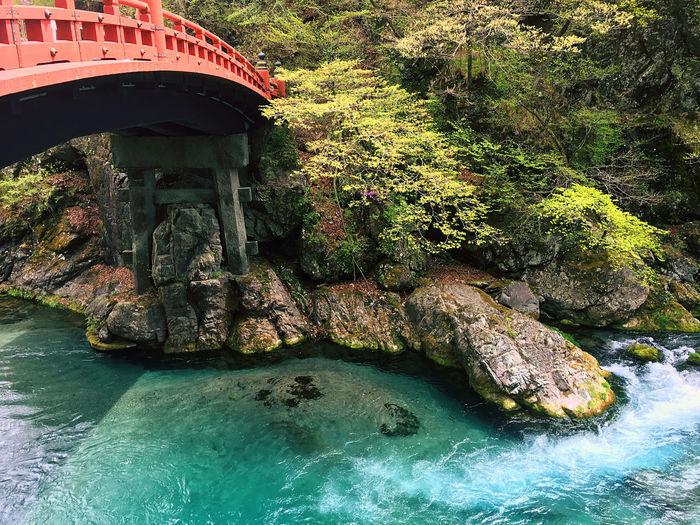 Shinkyo Travel