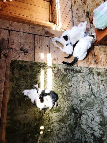 Pets Domestic Animal Themes Domestic Animals Animal Mammal One Animal Cat Feline Canine
