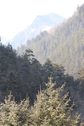 Scenic view of pine trees and mountains during winter