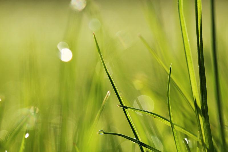 grass blades EyeEm