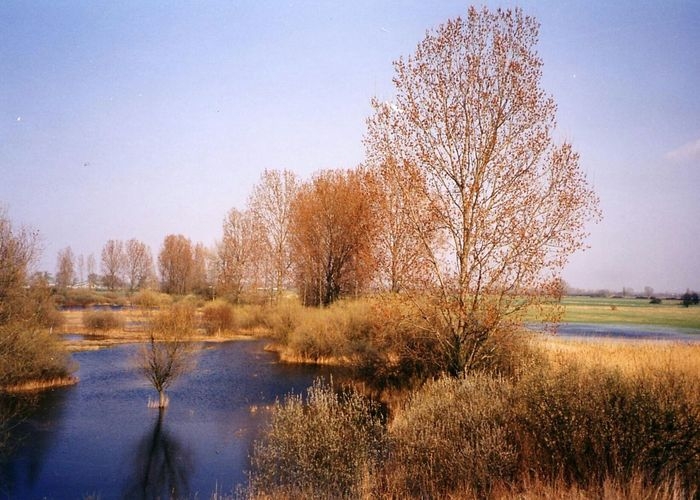 Nature reserve at a oxbow of the Rhine river Tranquil Scene Tranquility Tree Scenics Water Clear Sky Grass Marshland  Beauty In Nature Nature Growth Non-urban Scene Field Remote Day Blue Calm Countryside Solitude Autumn Film Film Photography Hessen Germany