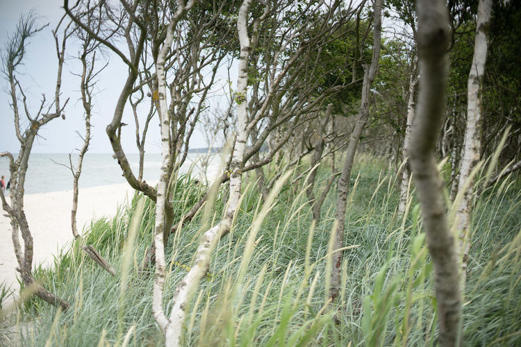 Auszeit an der Ostsee Baltic Sea Exploring Nature Naturschutzgebiet Ostsee Ostseeküste Travel Beauty In Nature Day Environment Forest Grass Growth Land Landscape Nature No People Non-urban Scene Ocean Outdoors Plant Scenics - Nature Tranquil Scene Tranquility Tree Tree Trunk Trunk Water