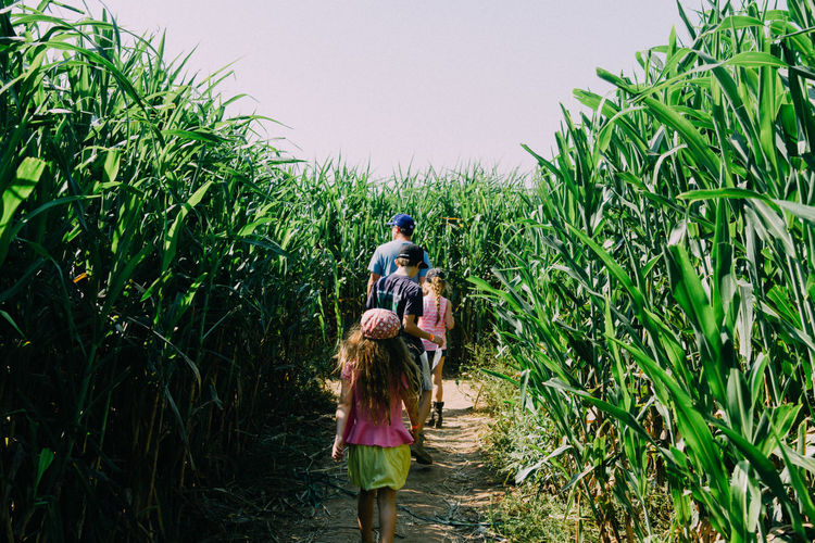Rear View Of Father With Children Amidst Corn Crops On Agricultural Field