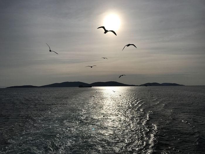 Bird Carrying Sun ☀️ Sun On Wings Birds Sea Mid-air Sky Flying Silhouette Scenics Sunset Tranquil Scene Island Ferry Birds Following Ferry Birds And Blue Sky Flying Freedom... Watching Birds Watching The Sunset Watching The Sea Feeling Free Nature Outdoors IPhone Photography
