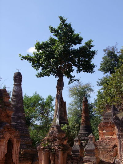 Tree Growing on Old Stupa (11th to 13th century) Ancient History Ancient Pagoda Architecture Blue Sky Buddhist Pagoda Buddhist Stupas Composition Growth Inle Lake Kakku Myanmar No People Outdoor Photography Place Of Worship Place Of Worship Religion Religion And Beliefs Shan State Stupas Sunlight And Shadows Tourism Tourist Attraction  Tourist Destination Tree Unusual