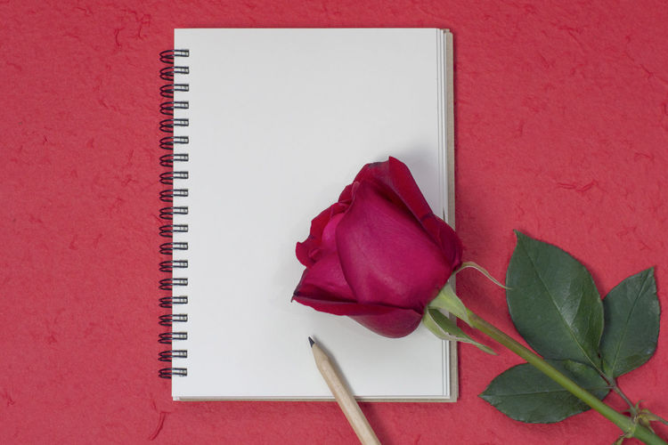 Directly above shot of rose with pencil on blank book