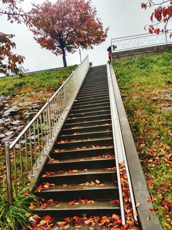 Stairs Tree Steps Railing Steps And Staircases Staircase Day Grass Sky Outdoors Korea Fall