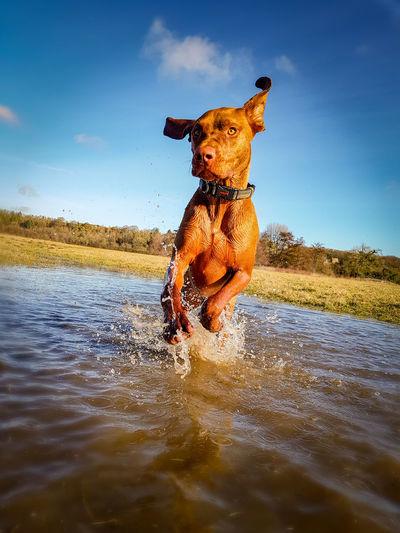 Visla Water Happiness Smiling Dog Portrait Fun Pets Lake Sky