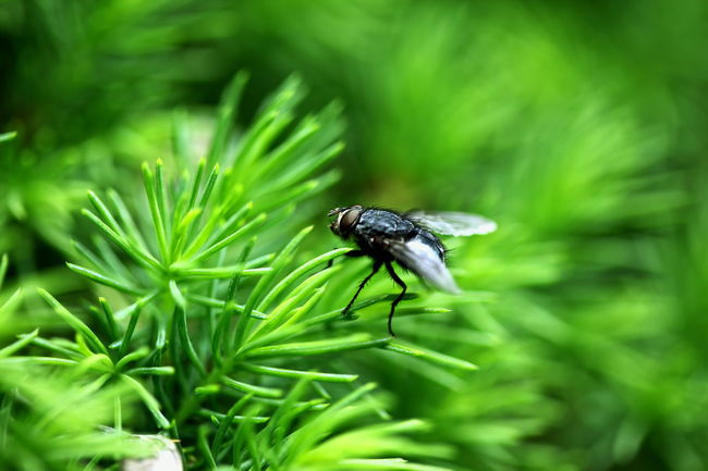 Beauty In Nature Bug Close-up Day Fly Focus On Foreground Green Color House Fly Insect Macro Nature No People Outdoors Plant Selective Focus Wildlife